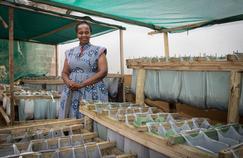 En Afrique du Sud, des potagers suspendus contre la faim