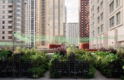 À Paris, franc succès de jardins partagés installés sur les toits