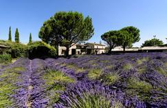 L'art de vivre en Provence: nos adresses et nos coups de cœur dans le Luberon