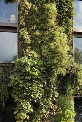 D'une superficie totale de 730 m2, le mur végétal comprend 376 espèces de plantes différentes.
