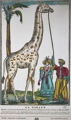 Une des nombreuses gravures représentant la girafe offerte à Charles X par le sultan Méhémet Ali en 1826.