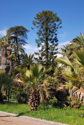 Le jardin Thuret a longtemps fait office de succursale du Muséum national d'histoire naturelle à Paris.