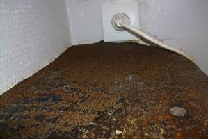 l 39 chelle de jacob ard che un village envahi par des fourmis. Black Bedroom Furniture Sets. Home Design Ideas