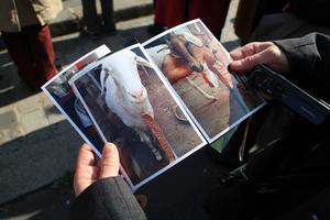 Kim a apporté des photos de ses chèvres. <i>Crédits photo: Marine Chassagnon.</i>