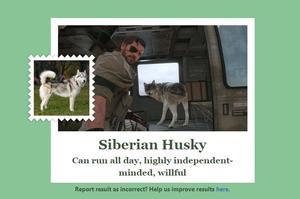 Capture d'écran du jeu MGS 5 passé au test, où l'on voit un Husky.