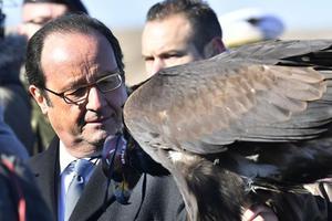 François Hollande s'est vu présenter un aigle royal dressé pour intercepter les drones.