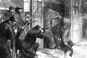 Pour nourrir les Parisiens affamés, les éléphants du Jardin des Plantes furent tués fin 1870.