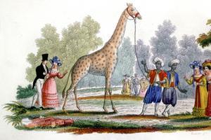 La girafe Zarafa, arrivée en France en 1826, vécut 18 ans au Jardin des Plantes