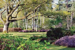 L'arboretum des Grandes Bruyères dans la forêt d'Orléans. Photo: JF Grossin.