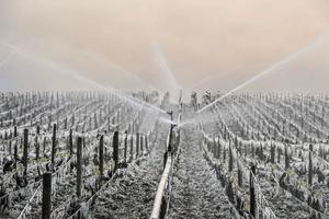 De l'eau est pulvérisée sur les vignes de Chablis (Yonne) afin de les protéger d'une attaque en profondeur du gel. Une technique efficace mais risquée.