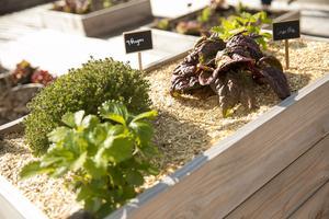Des bacs hors-sol sont disposés sur une surface de 1200 mètres carrés sur le toit du magasin. Crédits photo: Carrefour