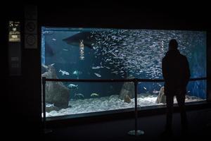 L'aquarium, l'une des attractions majeures de la ville.