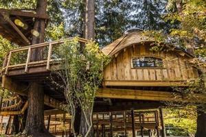Les cabanes en bois de chez Microsoft.