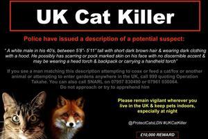 Une affiche de la police de Knights Hill prévient les habitants d'un possible tueur de chats en série.