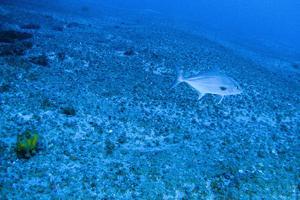 Le récif accueille de nombreux animaux marins.