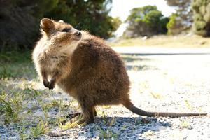 Rottnest Island - Australia