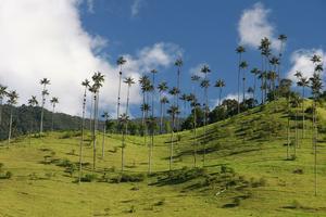 Colombie vallée de Cocora Salento