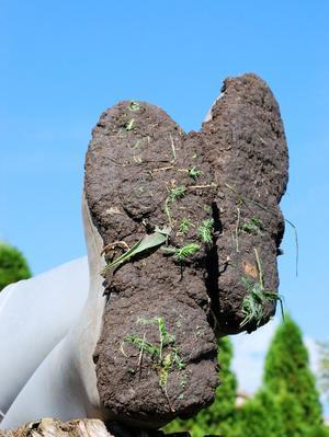 En faisant floculer les argiles, la terre collera moins à vos bottes...