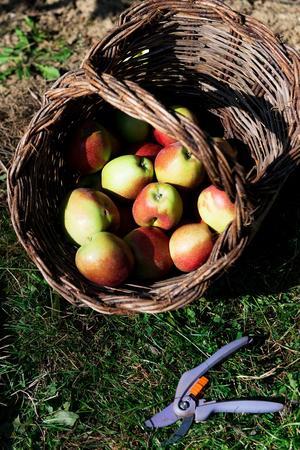 Pour certains citadins, ramasser des fruits et légumes de saison dans des fermes spécialisées est un moyen de redonner du sens à ce qu'ils mangent.