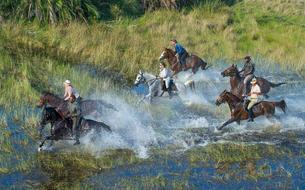 Au Botswana, à la découverte des marais de l'Okavango à cheval