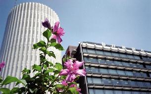 Au Japon, l'un des principaux quotidiens peut se transformer en fleur