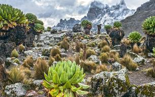 Le mont Kenya, entre neiges éternelles et vie sauvage