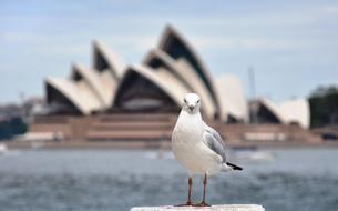Les 10 sites et attractions incontournables de l'Australie