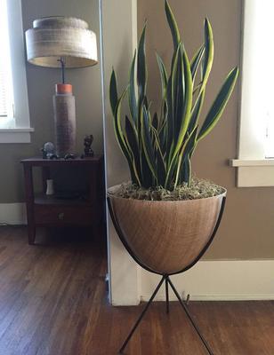 plong e dans l 39 univers graphique des plantes vertes. Black Bedroom Furniture Sets. Home Design Ideas