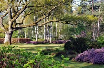 Le grand chêne bicentenaire de l'arboretum des Grandes Bruyères sera labellisé dimanche après-midi. Crédit photo: J.-F. Grossin.