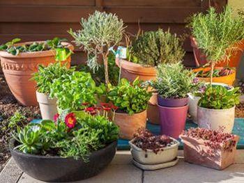 Diversité de formes et de matières, le choix des pots est une pure partie de plaisir.
