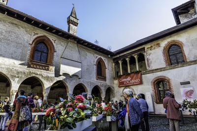 La fête des camélias a lieu tous les ans, fin mars, dans le cadre prestigieux du château Visconti, à Locarno.