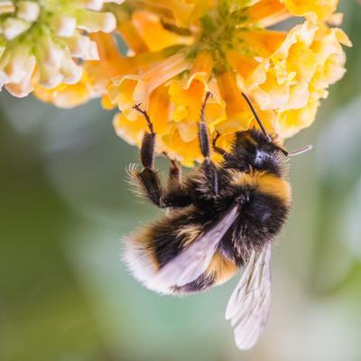 L'impact du bio sur la faune et la flore sauvage est moindre. Mais il y a des exceptions.