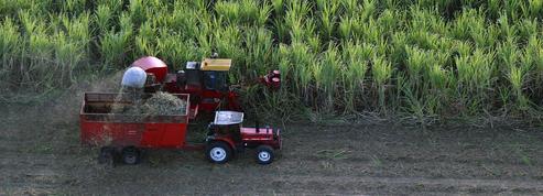 L'agriculture d'outre-mer veut croître sans les subventions