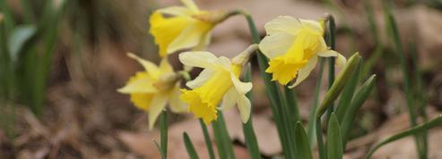 Pourquoi ce printemps ne commencera pas le 21 mars
