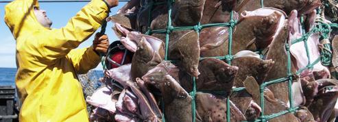 Dix ans pour réparer les dégâts de la surpêche