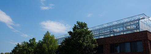 Les fermes arrivent sur les toits des villes