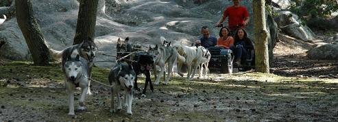 Glisse en traîneau à chiens à Fontainebleau
