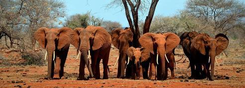 « Pour certaines espèces, les trafiquants représentent la menace principale»