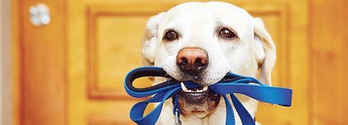 À Deauville, faire garder son chien à domicile coûte plus cher qu'ailleurs