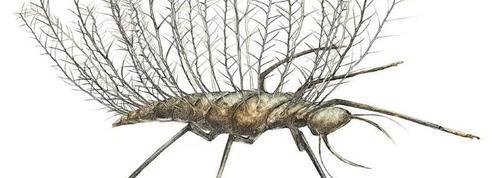 Les insectes se camouflent depuis la nuit des temps