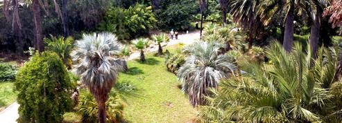 Antibes: le tour du monde des jardins à la Villa Thuret