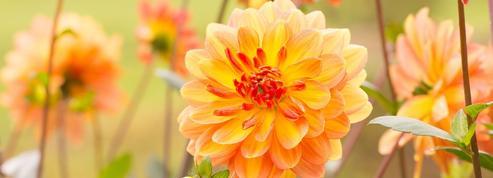 Jardin: plantez des fleurs et des légumes pour l'automne