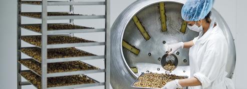 L'envol des insectes vers nos assiettes