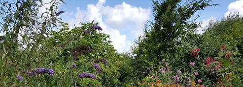 Au «Jardin Mosaïque», toutes les plantes sont les bienvenues