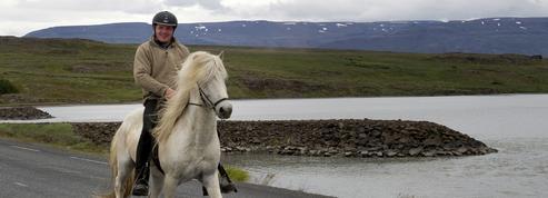 Le secret du trot chez les chevaux islandais
