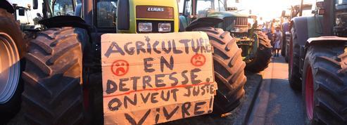 Natacha Polony : «Défendre l'identité de la France, c'est aussi sauver nos éleveurs»