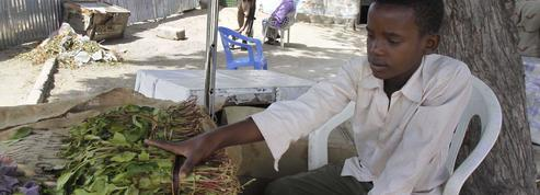 Le Kenya reprend ses livraisons de khat en Somalie