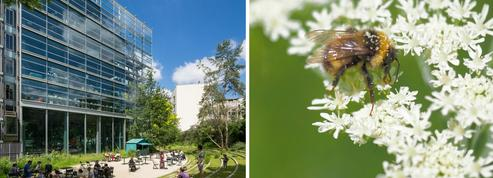 Fondation Cartier: un «jardin nature» en plein Paris