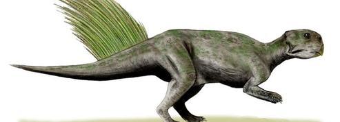Camouflage moderne chez les dinosaures