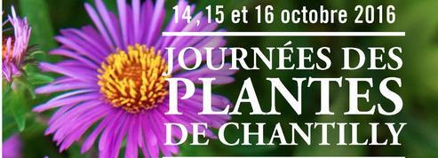 Journées d'automne de Chantilly: les plantes côté coeur